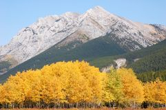 Autumn scene in rocky mountains Stock Photo