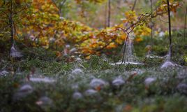 Autumn scene with spiderwebs and leaves royalty free stock images