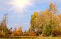 Autumn scene with sun Royalty Free Stock Photo
