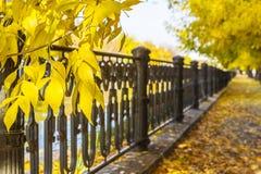 Autumn scene in a sunny autumn Stock Photos