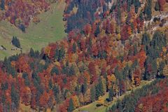 Colorful autumn forest in the Toggenburg valley, Swiss Alps. stock images