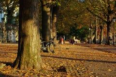 Autumn scene in town stock photography