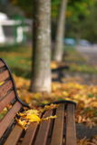 Autumn scene in town royalty free stock photo