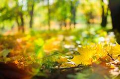 Autumn Scene In un parc images libres de droits