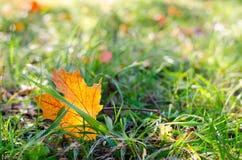Autumn Scene In un parc photo libre de droits