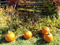Autumn Scene una colección de calabazas Fotos de archivo