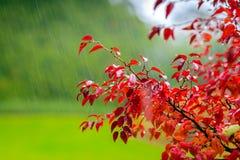 Autumn scene under rain Stock Photo