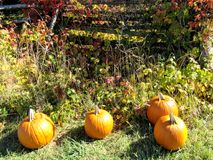 Autumn Scene une collection de potirons Photos stock