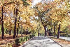 Autumn fall in park with colorful folliage. Autumn scene with walk on road in park royalty free stock image