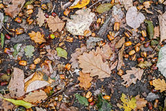 Autumn scene with walnuts Royalty Free Stock Photography