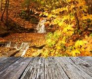 Autumn scene of waterfall Stock Images