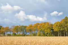 Autumn scene with wheat field Royalty Free Stock Image