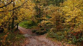 Autumn scene on a woodland track in Devon England. An autumn scene on a woodland track on Woodbury Common in Devon South West England stock images