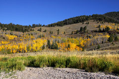 Autumn scene in Wyoming Stock Images