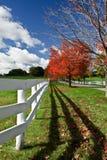 Autumn Scenery Stock Images