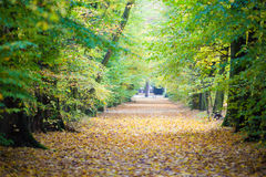 Autumn scenery. Trees and leaves in autumn scenery Royalty Free Stock Images