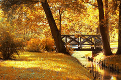 Autumn scenery. Beautiful gold fall in park Royalty Free Stock Photos