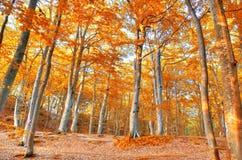 Autumn scenery. Stock Photo