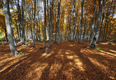 Autumn scenery Royalty Free Stock Photo