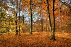 Autumn scenery. Sunrise in the forest in autumn royalty free stock photo