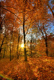 Autumn scenery. Sunrise in the forest in autumn royalty free stock image