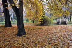 Autumn scenery Stock Photos