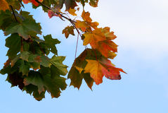 Autumn Scenery. On clear sky background Royalty Free Stock Photography