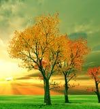 Autumn scenery. Beautiful autumn trees in the sunset stock illustration