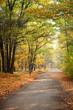 Autumn scenery. Beautiful and colour autumn scenery in the poland Royalty Free Stock Photography