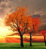 Autumn scenery Stock Image
