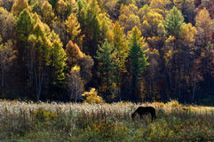 Autumn scenery Royalty Free Stock Images