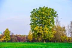 Autumn Scenery avec l'arbre branchu sur le pré Photographie stock libre de droits