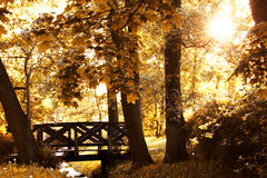 Autumn scenery. Stock Image