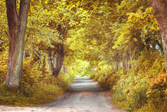 Autumn scenery. Royalty Free Stock Photography