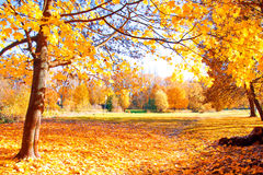 Autumn scenery. Royalty Free Stock Photo