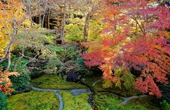 Autumn scenery of a beautiful Japanese garden ~ Aerial view of colorful maple trees in the garden of a famous Buddhist temple in K stock photos