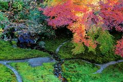 Autumn scenery of a beautiful Japanese garden ~ Aerial view of colorful maple trees in the garden of a famous Buddhist temple. In Kyoto Japan Royalty Free Stock Photos