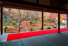Autumn scenery of a beautiful Japanese Garden in Kyoto Japan, with view through the sliding doors stock image