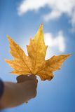 Autumn scenery, beautiful maple leaf Stock Photo