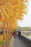 Autumn scenery in Beijing Royalty Free Stock Image