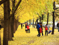 Autumn scenery in Beijing Royalty Free Stock Photo