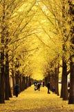 Autumn scenery in Beijing Stock Photography