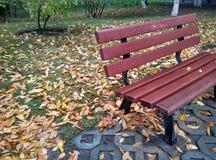 Autumn scenery in the botanical garden Stock Image