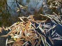 Autumn scenery of Botanical Garden Stock Image
