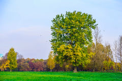 Autumn Scenery with Branchy Tree on Meadow Royalty Free Stock Photography