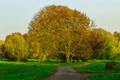 Autumn Scenery with Branchy Trees Royalty Free Stock Images