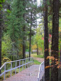 Autumn scenery. Cedar forest. Russian forests. Stock Photography