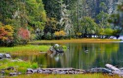 The autumn scenery Stock Photos