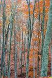Autumn Scenery coloré Images libres de droits