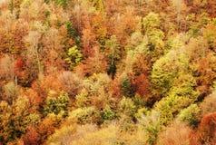 Autumn scenery Royalty Free Stock Photos